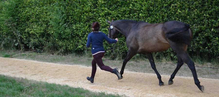 Horse Trials Championships 2013
